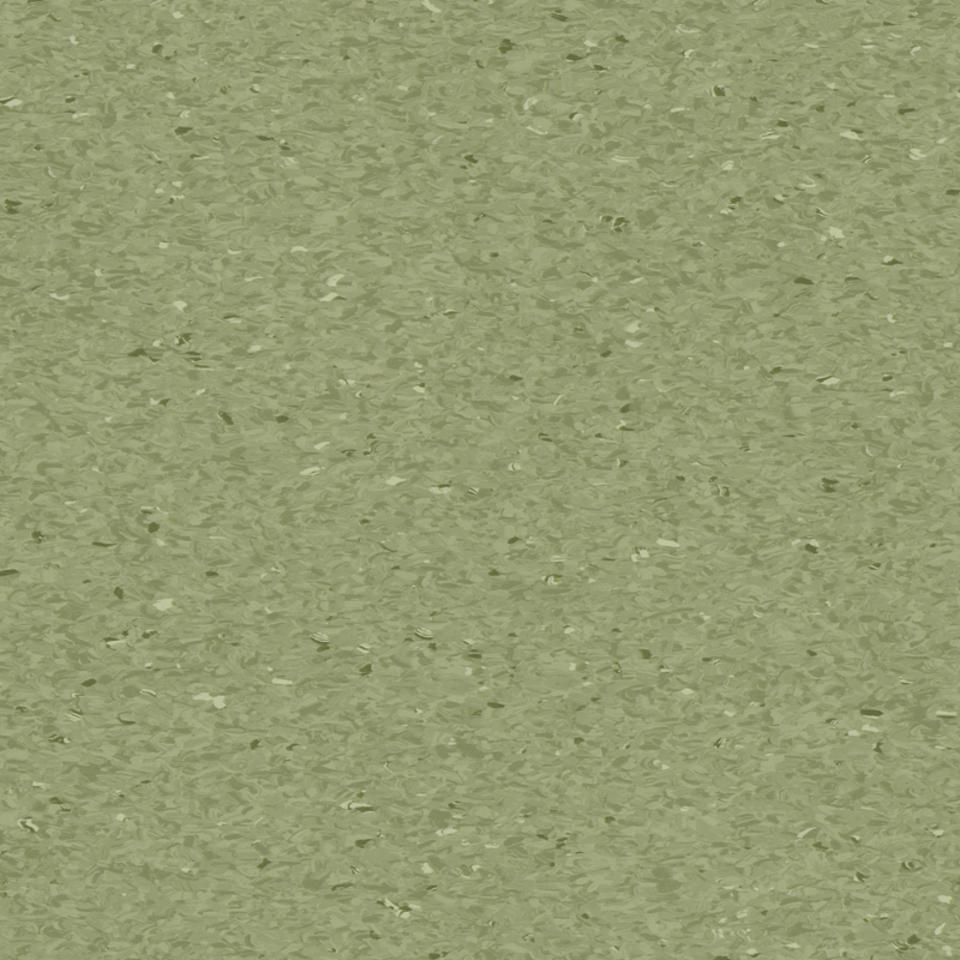 fern 0405
