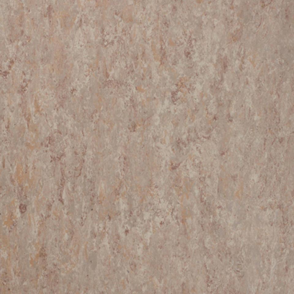 Veneto fossil 502